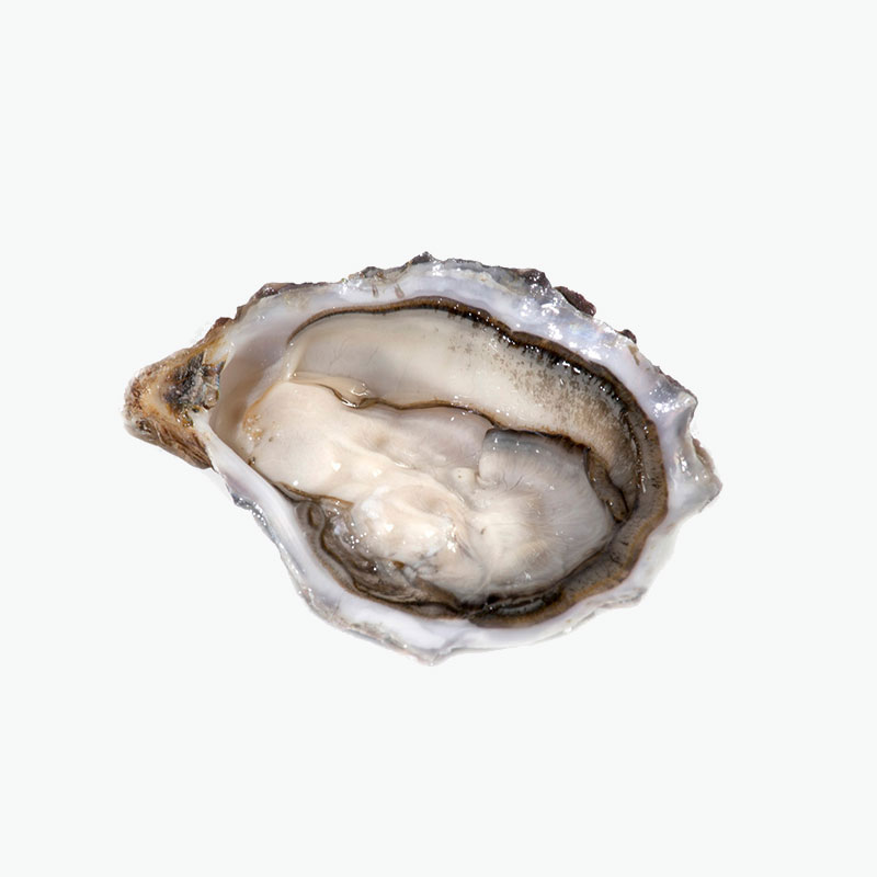 Irish Ostra Regal Oyster No2 12pcs