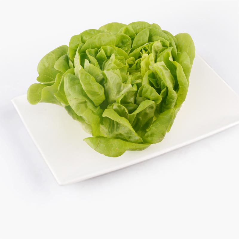 Aqua Green Green Butter Lettuce 120g