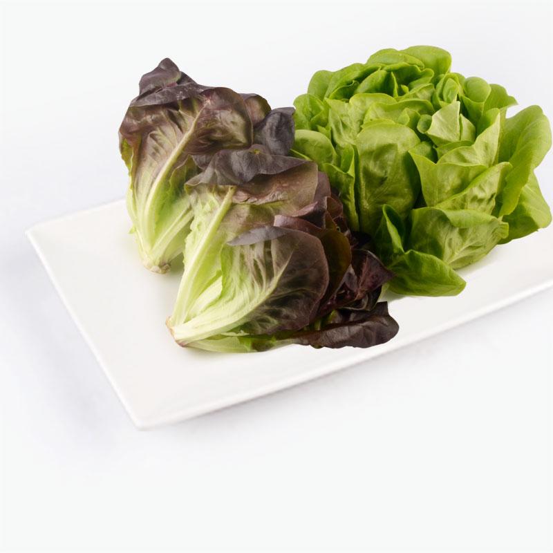 Aqua Green Baby Butter Lettuce 150g