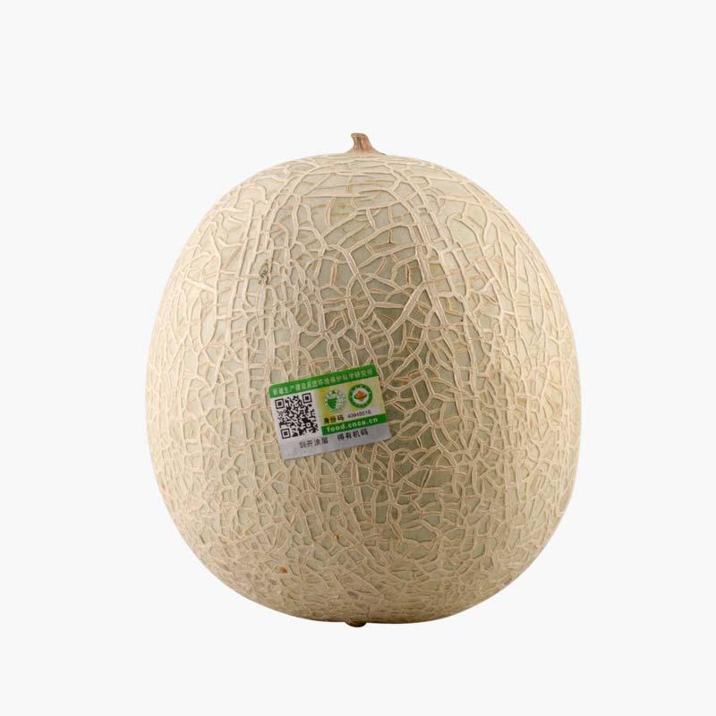Organic Cantaloupe Melon  1.25kg x1