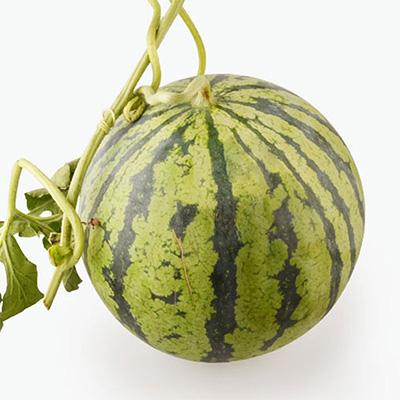 Nanhui 8424 Watermelon x1 (3.5-4)kg