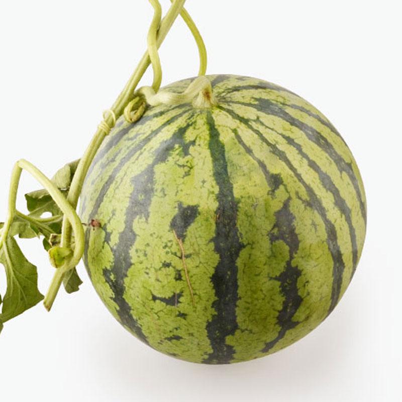 Nanhui 8424 Watermelon x1 (3.4-3.6)kg